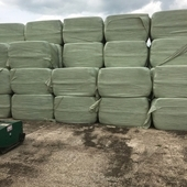 Square bales seed Haylage