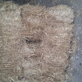 small bale barley straw