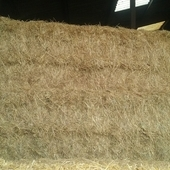 4 string Meadow hay