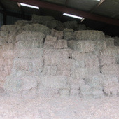 Great quality meadow hay