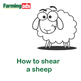 How to Shear A Sheep