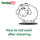 How to roll wool after shearing your sheep