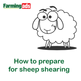 How to prepare for sheep shearing